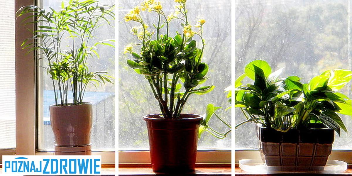 rośliny do sypialni