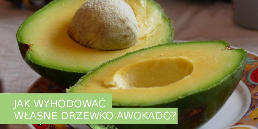 Awokado- w-domu