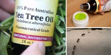 olejek-drzewo-herbaciane