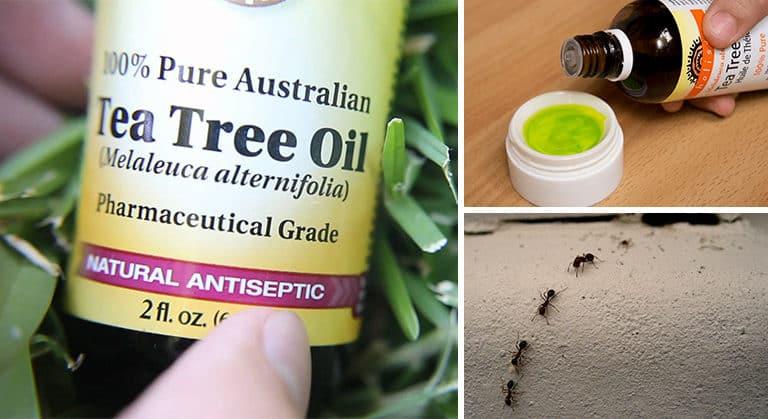 5 Właściwości Olejku z Drzewa Herbacianego, Które Musisz Znać!
