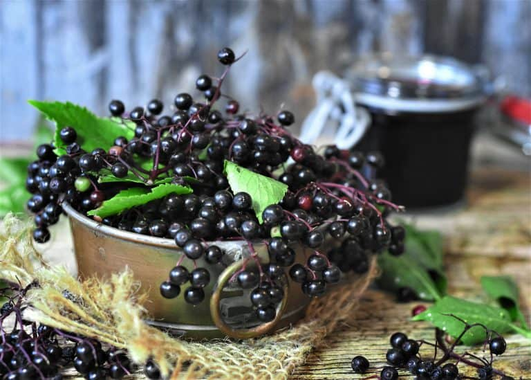 Syrop z kwiatów czarnego bzu – właściwości, działanie, przepis